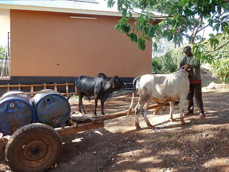 Wasserversorgung mit Ochsenkarren